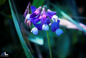 The Beauty of Flowers - part 2b by imonline