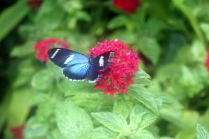 Butterfly and Flowers by orasa