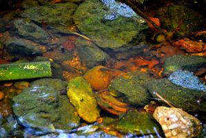 More Minnows by Chris2059