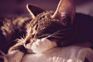 Sleeping Kitten by LouCrow