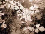 Leaves by musicismylife2010