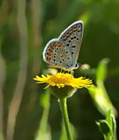 flower and butterfly' by lisans