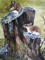Yellow-Necked Wood Mice by Ziroden