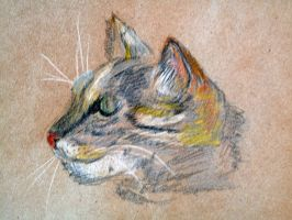 Cat's head sketch by Alekra81