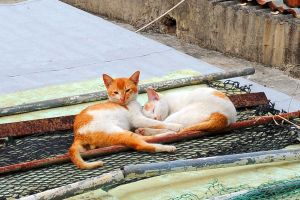 Cats on the Roof (Hong Kong, China) by drewhoshkiw