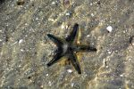 Underwater Sea Star by DavidGrieninger
