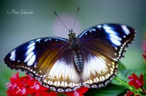 Colorful. by Phototubby