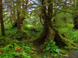 Tongass Rain Forest by Glacierman54