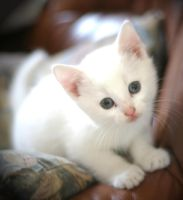 White Cat 2561329 by StockProject1