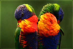 Rainbow Lorikeet 2.0 by theperfectjez