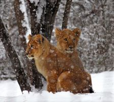 Snow Babies by cindy1701d