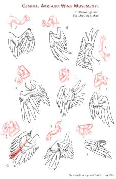 Wing-Movement Sheet 2 by Lizkay