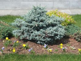Stock: Tiny fir-tree by Think-Outside-Of-Box