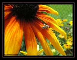 Susan and the Bee by picworth1000wrds