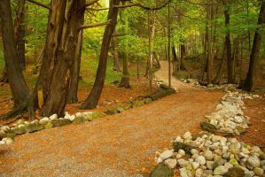 Rockwood Forest by chirilas