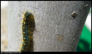 Blue catterpillar by TortueBulle
