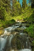 Green Colors and a Stream by mjohanson
