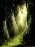 Mystical forest by LunaSombria