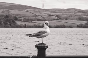 Gull by ScENeYmE