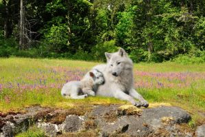 The wolf will Reside with the lamb by Loulou13