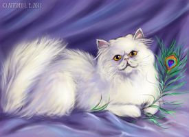 Persian cat by Amadeo-Amadeo