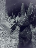 Looking Glass Rabbit by enticement