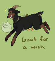 Goat for a week by Ask2pAustriadog