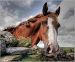 HDR Horse by johndavis0