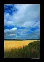 Wheat field by grugster