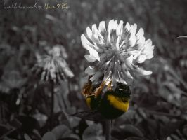 Bumble-Bee works by Noem9