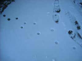 Cat tracks in the snow by SpaceShipEarth