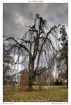 Late Fall Tree HDR by yellowcaseartist