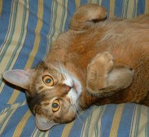 Foxy Cat down side up by Soniafm1027