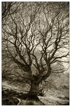 Tree of life by arnopiel