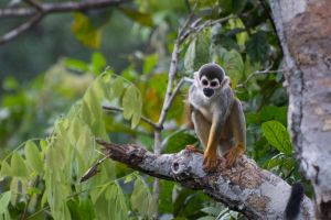 Spider Monkey by thankyoujames