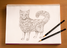 Drawing fur the easy way - tutorial by LadyAway