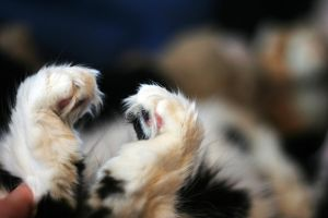 Lucy - heart shaped paws by sayra