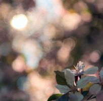 Blurred cherry blossom by FuturamaJSP