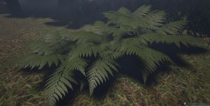 ferns by CaptainApoc