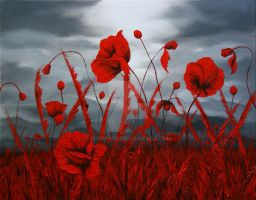 Poppies7 by florescu