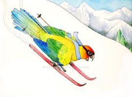 Skiing Parrot by greencheek
