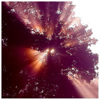 my little stars by werol