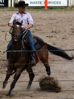 Stock - Horse Team Penning - 031 by aussiegal7