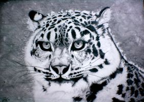 Serious Cat.Snow Leopard by SleepyOctopus