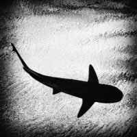 Shark by MichiLauke