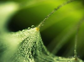 Dandelion Dew - Green by JoniNiemela