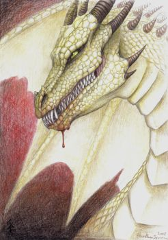 pencil drawing of a Dragon by nocturnalMoTH