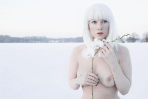 Snow Orchid by Muse1908