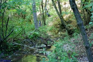 Wood River_1 by Zuberiuth