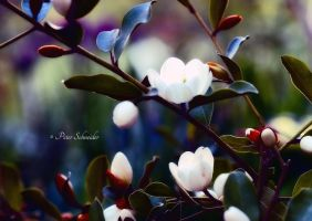 Snow white. by Phototubby